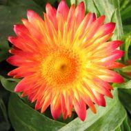 stock-flowers_04