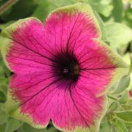 stock-flowers_05