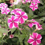 stock-flowers_06