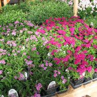 stock-flowers_07