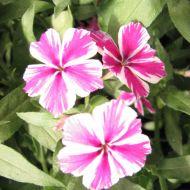 stock-flowers_09