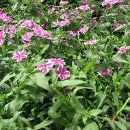 stock-flowers_10