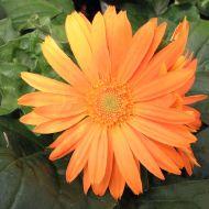 stock-flowers_11