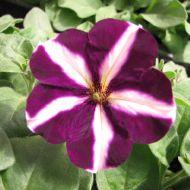 stock-flowers_12