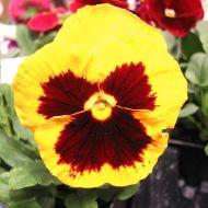 stock-flowers_13