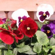 stock-flowers_14