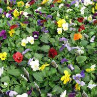 stock-flowers_17